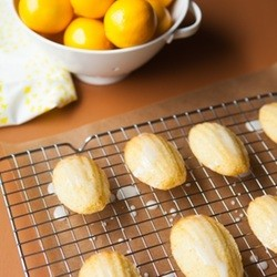 Meyer Lemon Madeleines from The Little Kitchen