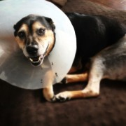Charley Post FHO Surgery