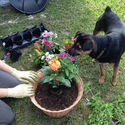 Gardening with Angel