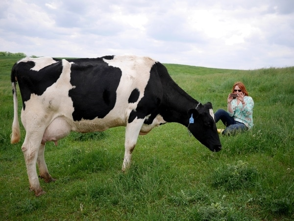 Ree and the Dairy Cow