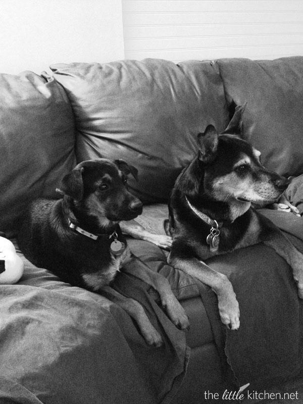 Charley & Angel