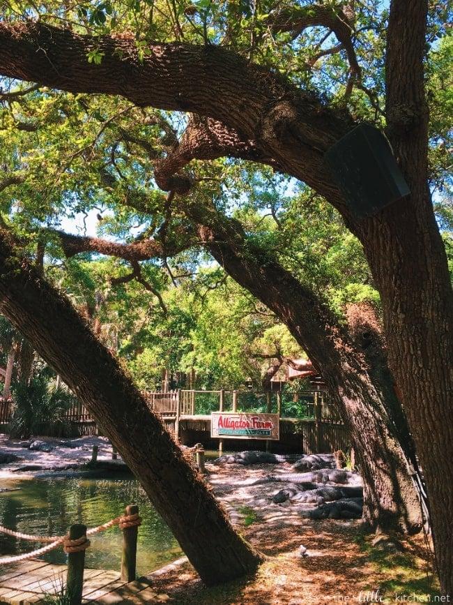 Trip to St. Augustine, Florida thelittlekitchen.net